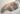 I was an arctic fox. Vulpes lagopus.K.Bossell. wax forton and fur. 45 x 26 x 10cm